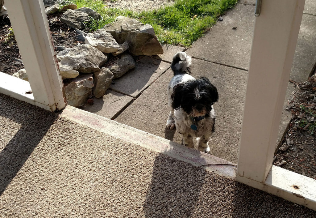 Photo of dog at doorway