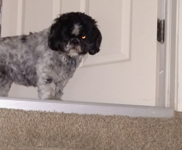 Photo of dog at top of staircase