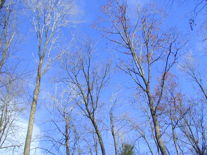 Photo of blue sky through trees.